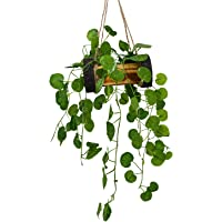 DecoreBugs Artificial Hanging Leaves with Wood Pot (Green, 1 Piece)