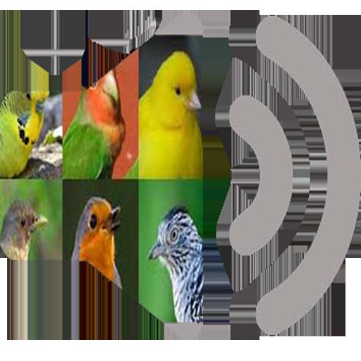 sonido-pajaros-cantores