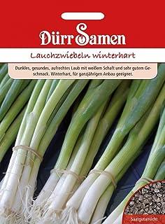 """Premier Seeds Direct HRB93 Welsische Zwiebeln /""""Allium Fistulosum/"""" Samen Packung mit 1000"""