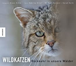 Wildkatzen: Rückkehr in unsere Wälder