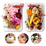 SHAFIRE Dried Flowers For Candle (Multicolour,17 x 11.5 x 2.9Cms,1 Piece)