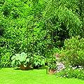 Gardman Versailles Rosenbogen, Metall, 2,4 x 1,2 m von Gardman - Du und dein Garten