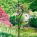 Rankschirm Baldachin von Gärtner Pötschke - Du und dein Garten