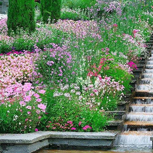 Rose plantes Mélange de graines