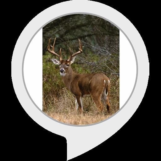 deer-geek