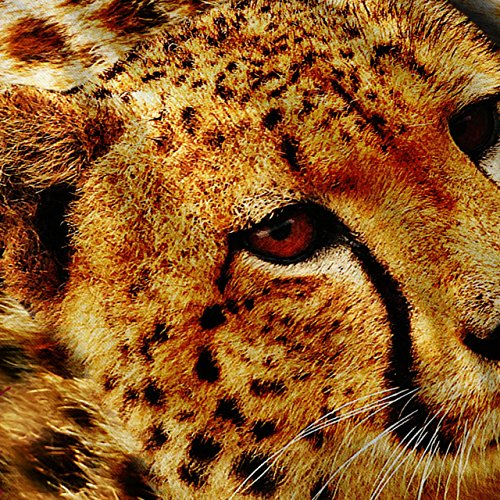 Gepard Natur Tier Intensiv Schau Damen S-2XL Muskelshirt | Wellcoda Rot