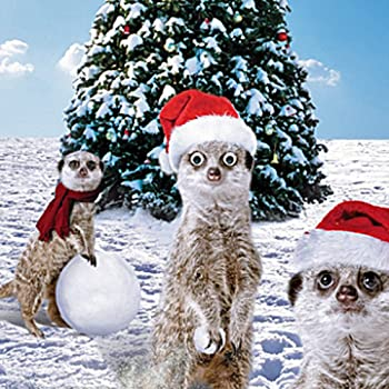 Hamster in tutu single christmas card 3d goggly moving eyes amazon meerkats in the snow single christmas card 3d goggly moving eyes m4hsunfo