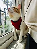 Birds' Park Adjustable Durable Body Vest Harness for Large and Medium Cat