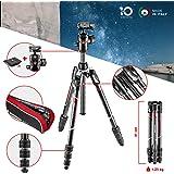 Manfrotto Befree Advanced Carbon Reisestativ Twist (Drehverschluss) mit Kugelkopf, inkl.Tasche (für Canon, Nikon, Sony, DSLR, CSC, Spiegellose Kamera, Traglast:8kg, Packmaß:41cm, Gewicht:1,25kg)