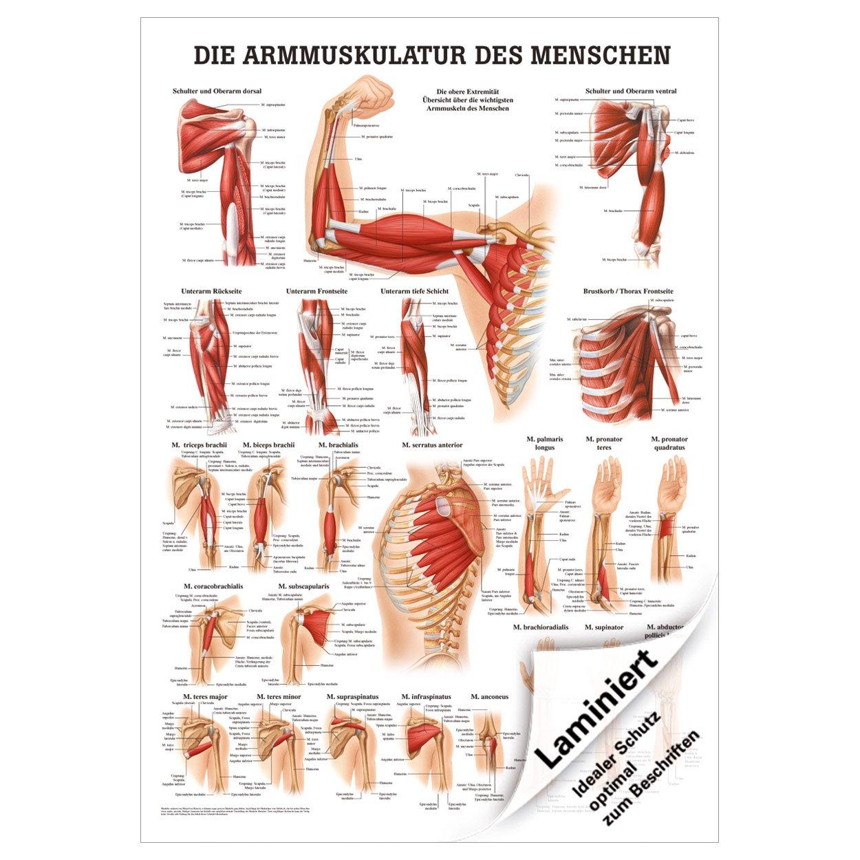 Fein Brustbereich Zeitgenössisch - Anatomie Und Physiologie Knochen ...