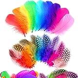 Sunshine smile 300 pièces Plumes De Multicolore,Plumes Colorées,Naturelle Plumes,Plumes Loisirs Creatifs,Non-Toxique Naturell