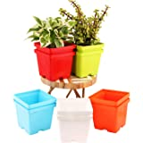 Leafy Tales Plastic Square Pots, Multicolor 9.5 x 10.5 x 8 cm 10 Piece, 25 Varieties - 1600+ Seeds, 25 Varieties - 1600+ Seed