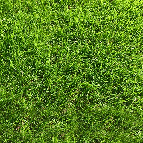 1 kg Grass Seed Covers 35 sqm – Premium Quality Seed – Fast Growing – Hard Wearing Lawn Seed – Tailored to UK Climate – Trademark Registered – 100% Refund