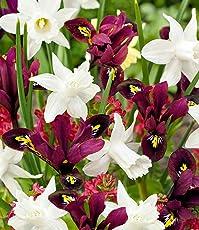 """BALDUR-Garten Zwiebel-Mix""""Pole Position"""" Iris Narzissen, 15 Zwiebeln Narcissus und Iris winterhart"""