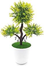 Bonsai Artificial Dwarf Tree ~ Artificial Plants With Pot And Grass Ideal For Home Décor. With Realistic Detailing size - 27cm x 20cm (pot - 9cm x breath 4cm)
