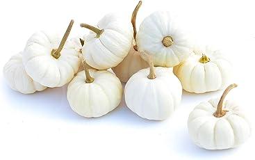 10 Mini Baby Boo Kürbisse - weiße, Kleine Kürbisse (ca. 100 Gramm je Kürbis) - Speisekürbisse, auch ALS Dekokürbisse verwendbar - HerbstdekoKürbisse für innen und außen