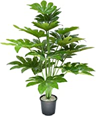 Samriddhi Artificial Star Leaf Plant with Pot for Home Decor