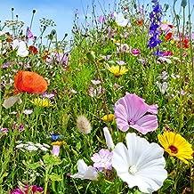 Plantas silvestres anuales y perennes mezclaron semillas