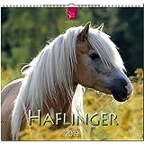 MF-Kalender HAFLINGER 2019