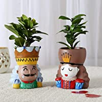 Ferns N Petals Set of 2 Ficus Compacta in King Queen with Two Raisin Pots |Christmas Gift | Valentines Gift |Birthday…