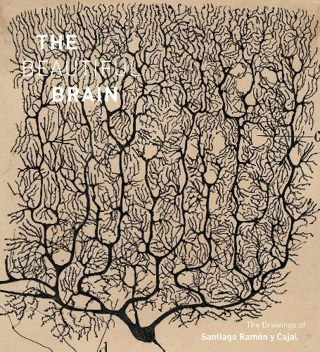 The Beautiful Brain : The Drawings of Santiago Ramon y Cajal