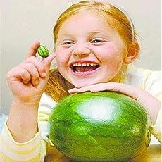 Soteer Garten- Bio mini Wassermelone Samen Minigurke Daumen Samen Kleine Finger-Melonen Saatgut Essbar