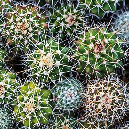 Apple iPhone 5 Housse Outdoor Étui militaire Coque Cactus Plante Succulentes Plantes grasses Étui en cuir marron