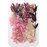geneic 1 Doos Real Mix Gedroogde Bloemen voor Aromatherapie Kaars Hars Sieraden Droge Planten Geperst Bloem Maken Craft DIY A