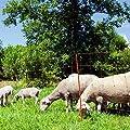 Ako Schafnetz OviNet orange 50m von Kerbl - Du und dein Garten