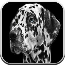 Cane Giochi Free For Kids: Barks, puzzle e Gioco di corrispondenza
