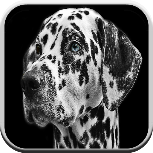 Hundespiele Free For Kids: Barks, Puzzle und Matching Game
