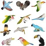 Plastic Model Bird Figures Kids Toy Set of 12pcs Multi-color
