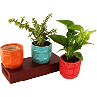 Leafy Tales Set of 3 Barrel Shape Ceramic Pot, Pot Only (Multi- Color)