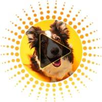 Dog Sounds and Ringtones