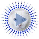 Katze Geräusche Klingeltöne