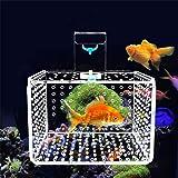 ANTOLE Transparent Fish Guppy Breeder Box Aquarium Fish Breeder Box Brine Shrimp Hatchery Perfect For Protect Fry