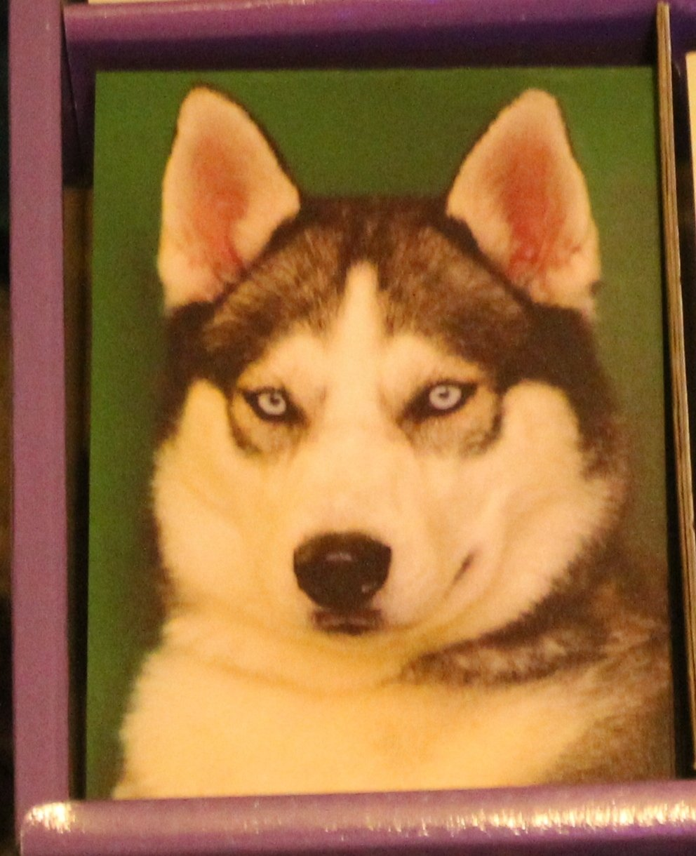 SIBERIAN HUSKY FRIDGE MAGNET NOTEPAD