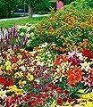 BALDUR-Garten Schmetterlings-Kollektion,40er-Mix von Baldur-Garten auf Du und dein Garten