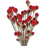 XHXSTORE 2 stuks gedroogde bloemboeketten gedroogde craspedia natuurlijke gedroogde Billy ballen gedroogde bloemen voor vaas