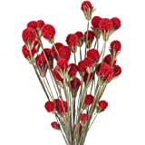 XHXSTORE 20pcs Flores Secas Gypsophila Ramo de Flores Natural Otoño Bolas de Craspedia Rojo para Decoración Ramo de Boda Manu