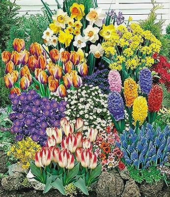 BALDUR-Garten 140 Blumenzwiebeln Spar-Paket, 140 Zwiebeln im Mix mit Tulpen, Narzissen Hyazinthen, Anemonen, Zierlauch und mehr von Baldur-Garten - Du und dein Garten