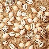 PandaHall 50 Stück Natürlichen Muschel Perlen Weiß für DIY Schmuck - 2
