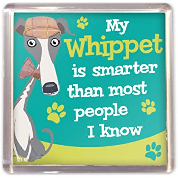 Wags /& Whiskers Cockapoo Magnet New 00204010011