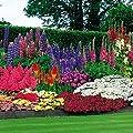 47 Pflanzen + 100 Blumenzwiebeln von Meingartenshop - Du und dein Garten