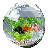Candora™ - Boule aquarium à accrocher au mur - Acrylique - Décoration