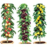 Column Fruit Trees (Set of 3) | easylife lifestyle solutions