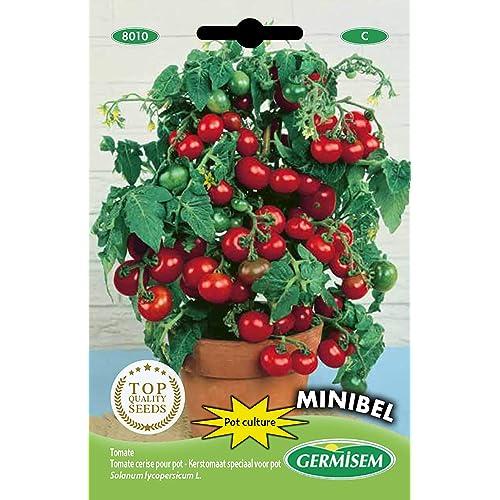 Germisem Minibel Semi di Pomodoro 0.5 g