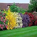 Blühende Hecke - 5 heckenpflanzen von Meingartenshop - Du und dein Garten