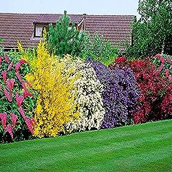 Blühende Hecke - 5 heckenpflanzen