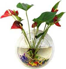 Outgeek Acrylic Fish Bubble Wall Hanging with Flower Vase Plant Pot Aquarium, 5.9-inch